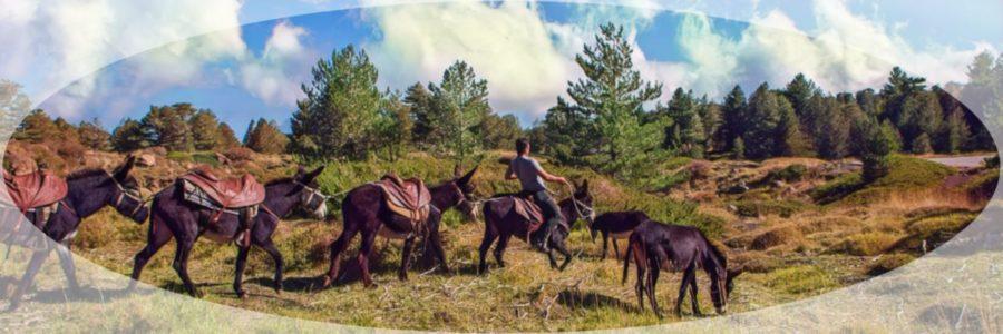 Etna Donkey