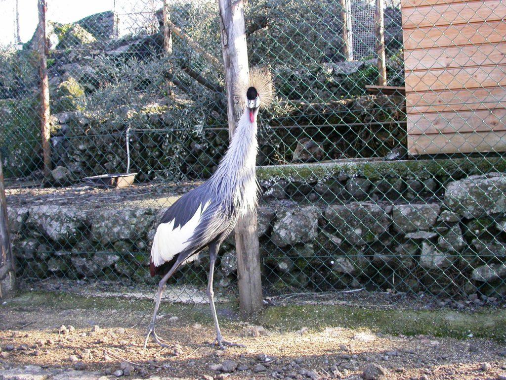 Vedere gli animali in Sicilia