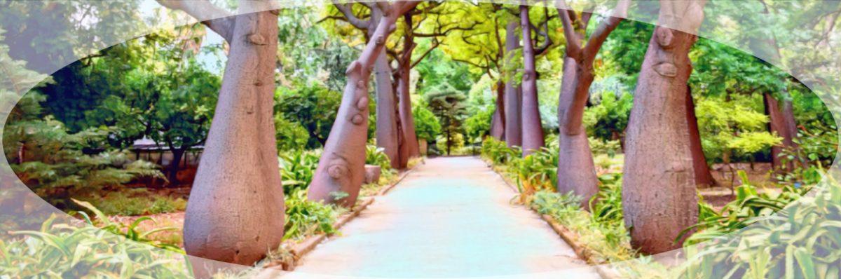 Orto Botanico Sicilia